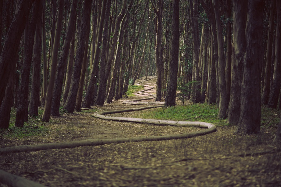 forest-trees-path-pipe